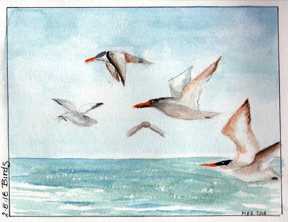 2.8.18 Birds Terns and Gulls at Turtle Beach. 2.8.18 Birds img368