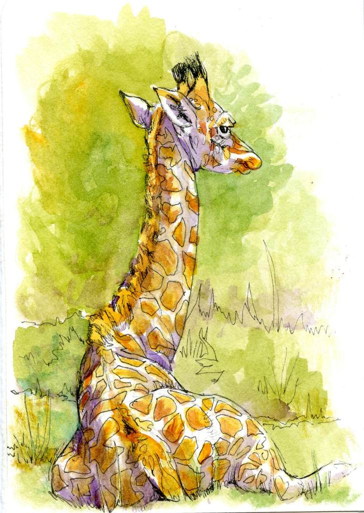 I skipped the butterflies and went straight to the wild animals. There are four species of giraffe,
