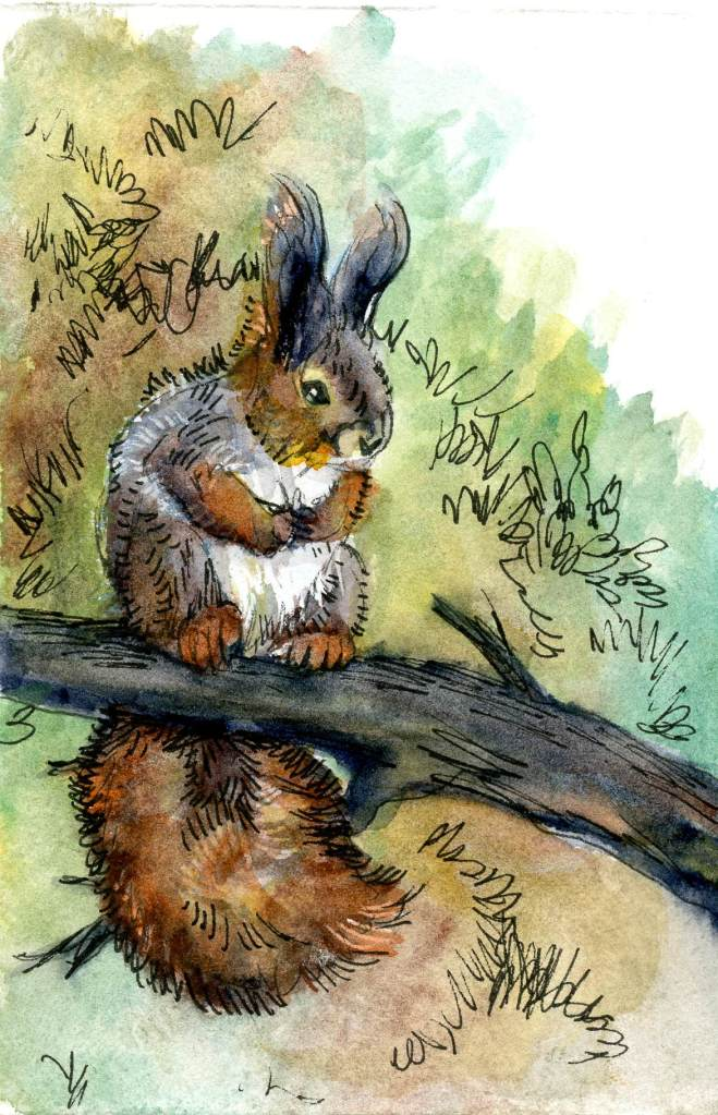 The British Red Squirrel, despite its name, comes in various colors according to the season and the