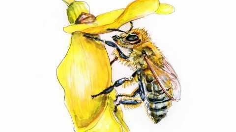 #WorldWatercolorGroup - Day 1 - Bees - Hidden Wonders - Doodlewash