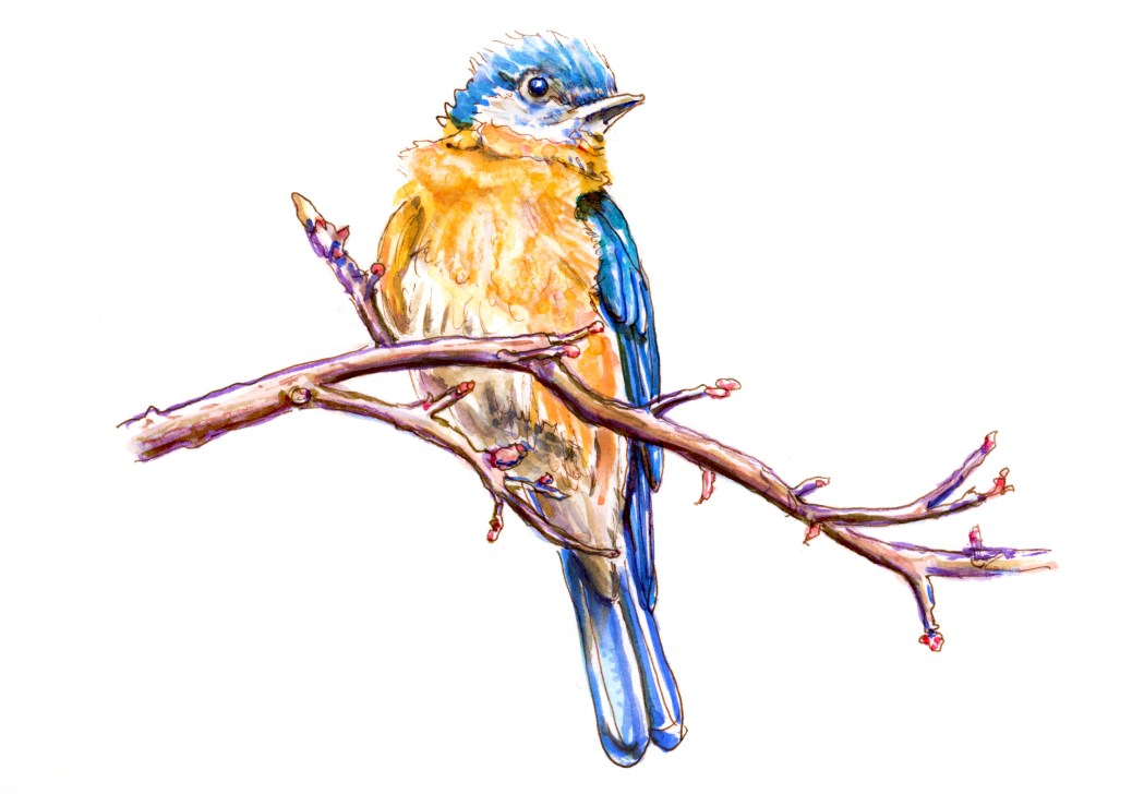#WorldWatercolorGroup - Day 16 - A Bird In A Tree - Bluebird - Doodlewash