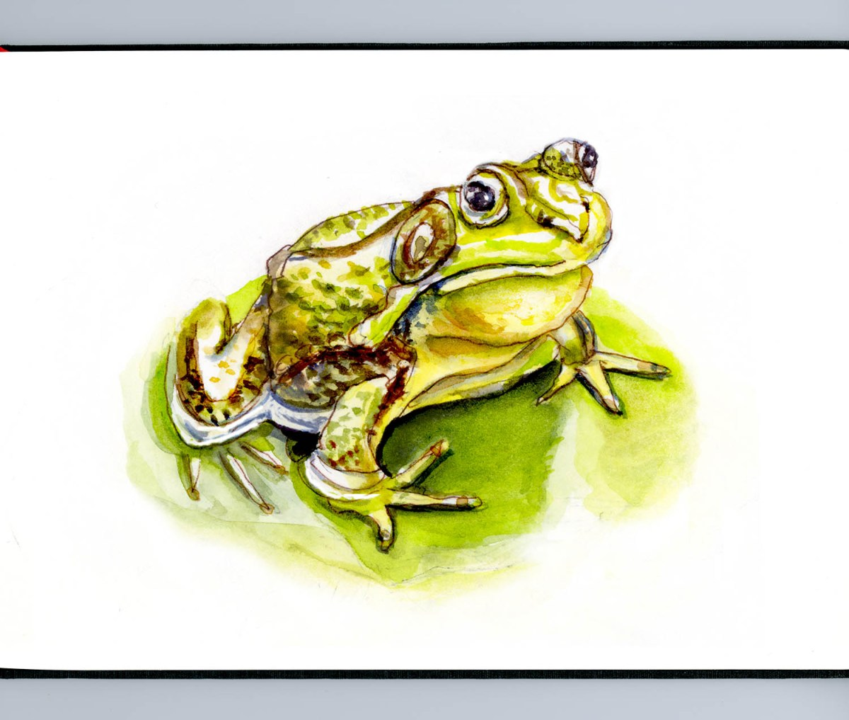 #WorldWatercolorGroup - Day 19 - Kissing A Frog - Doodlewash