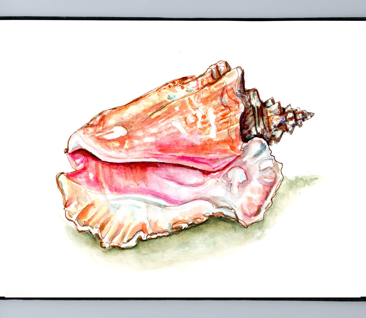 #WorldWatercolorGroup - Day 23 - Seashells By The Seashore - Conch Shell - Doodlewash