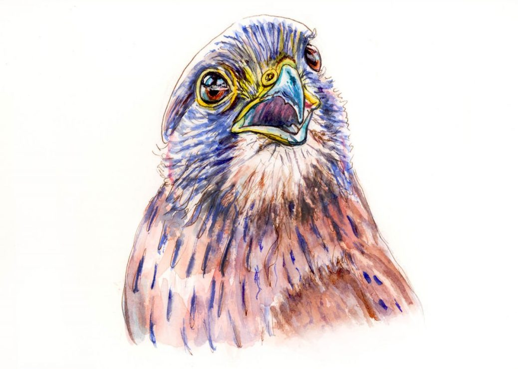 #WorldWatercolorGroup - Day 8 - Happy As A Bird - Rock Kestrel - Doodlewash