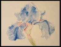 Flowers - By Mandi