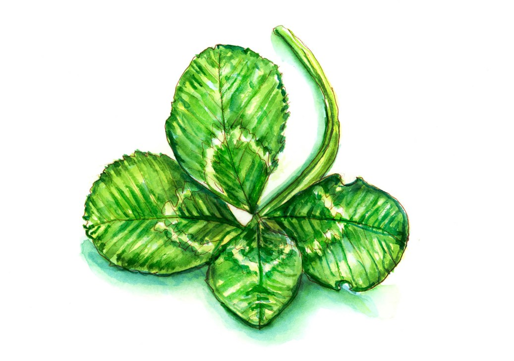 #WorldWatercolorGroup - Day 17 - Finding Four Leaf Clovers - Doodlewash