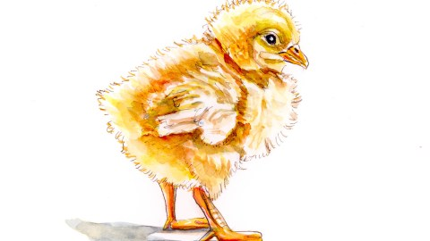 #WorldWatercolorGroup - Day 20 - The First Day Of Spring Baby Chick - Doodlewash