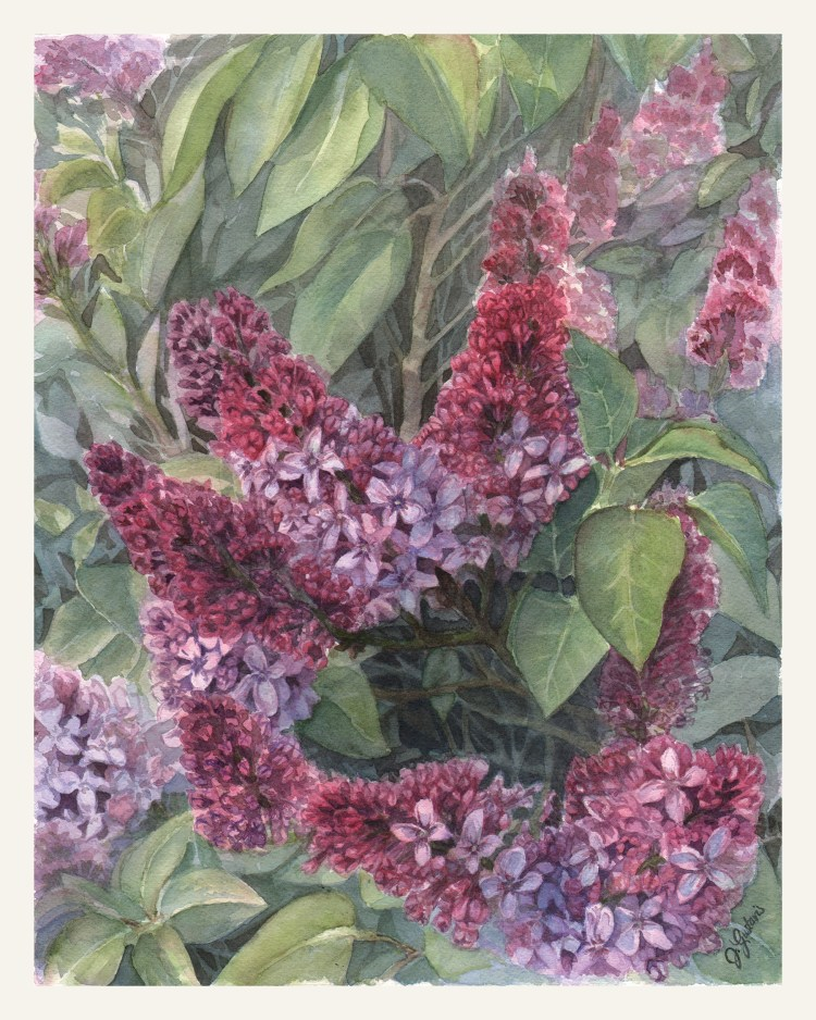 Lilac Afternoon, 11x14in, Arches 140lb CP Floral_Lilacs_WC
