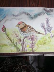 Asparo the the beautiful bird Hope you enjoy it IMG_20171106_163137573