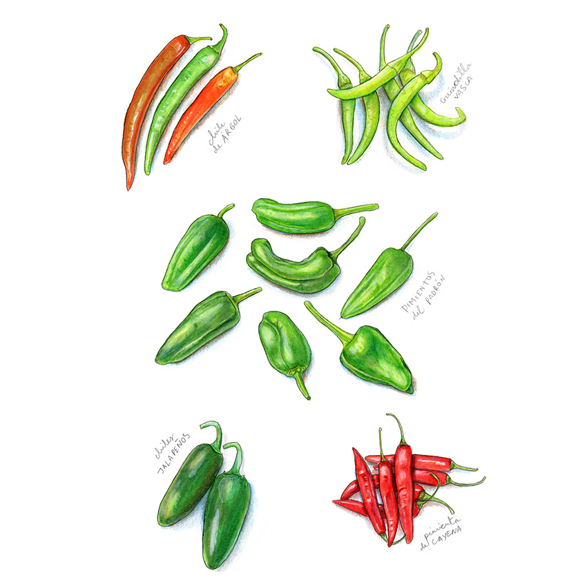 Five varieties of spicy peppers. Spicy Peppers II by Miriam Figueras