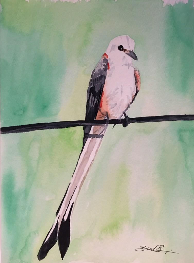 Oklahoma scissor-tailed flycatcher. 44331683-0178-47FB-901B-31B85B85F7BF