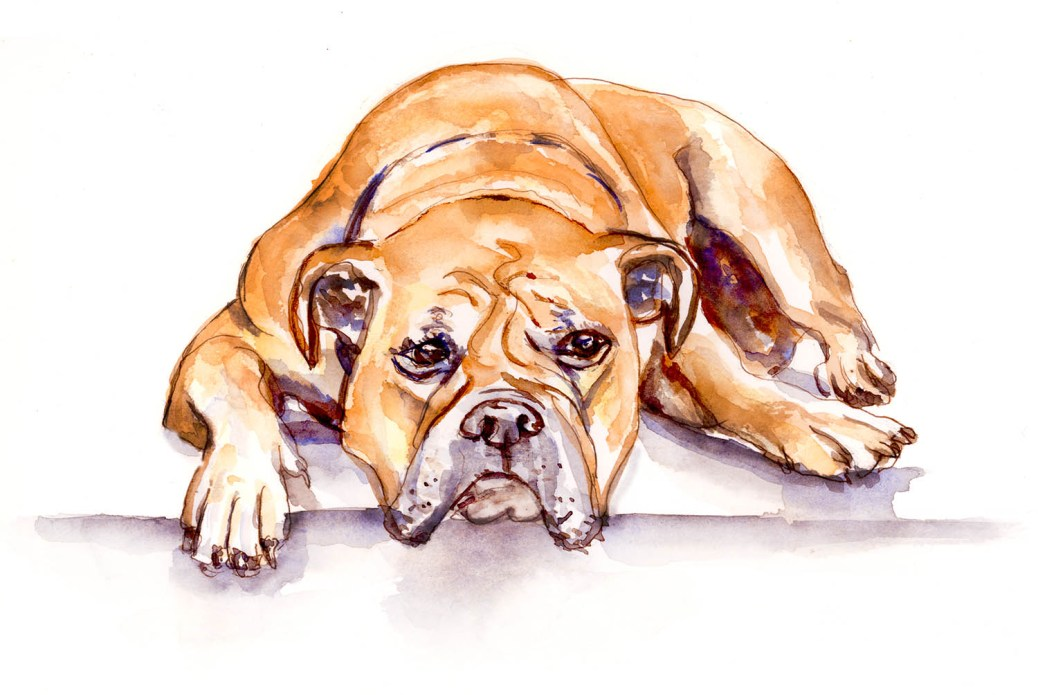 Day 14 - Pets Continental Bulldog Best Friends Forever - Doodlewash #doodlewashApril2018