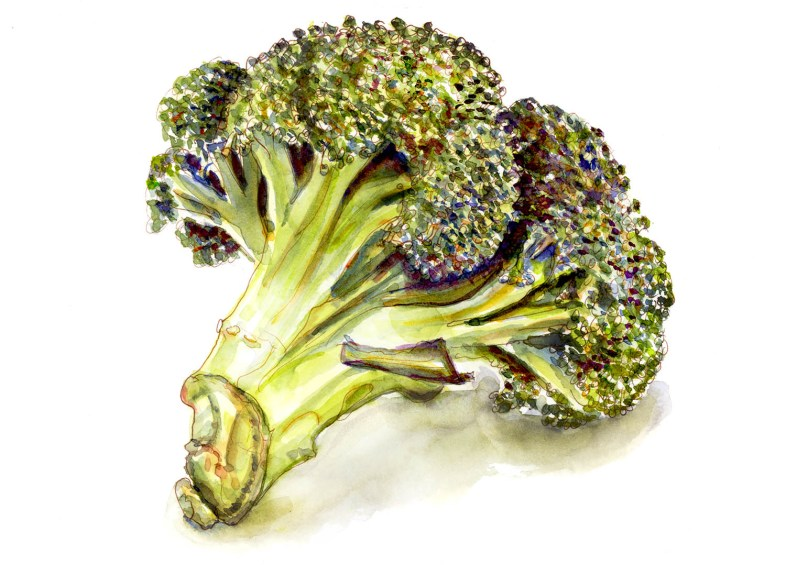 Day 23 - Broccoli - Eating Little Trees - #doodlewashApril2018 Doodlewash