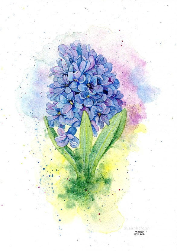 Hyacinth - Watercolor Illustration by Jean Balogh - Doodlewash