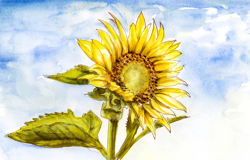 Blue Sky Sunflower Charlie's Shiny Da Vinci Trio ©Doodlewash