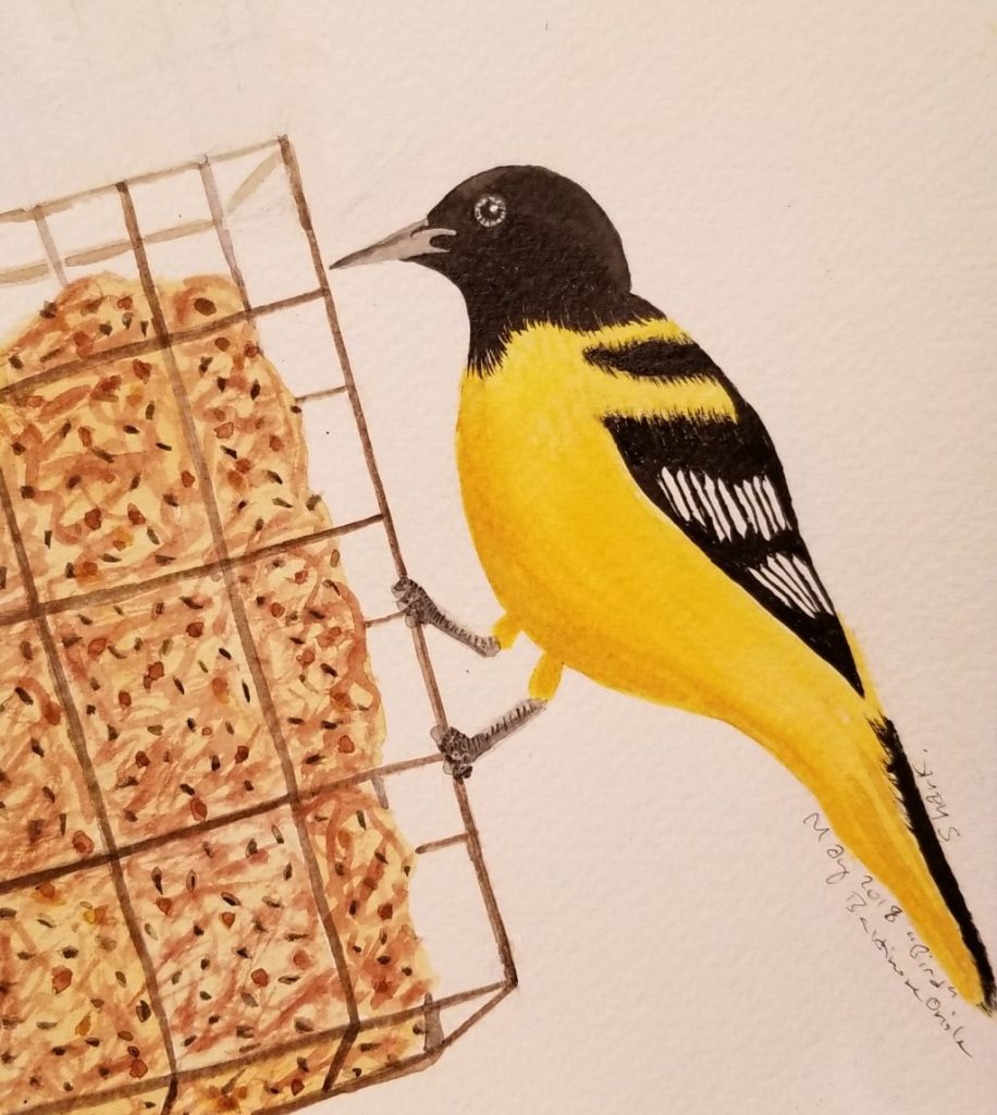 Saw a Baltimore Oriole on our suet holder last week, just in time for our prompt of bird. It flew aw