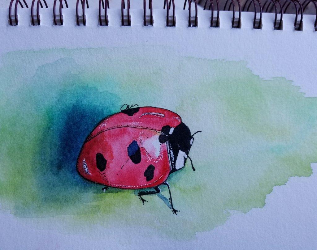 A ladybug for today's challenge. 20180522_183236