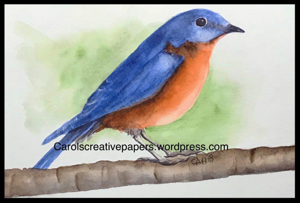 Bluebird, Draw a Bird Day May B12C7F63-D604-442B-B239-8E5C650A6674