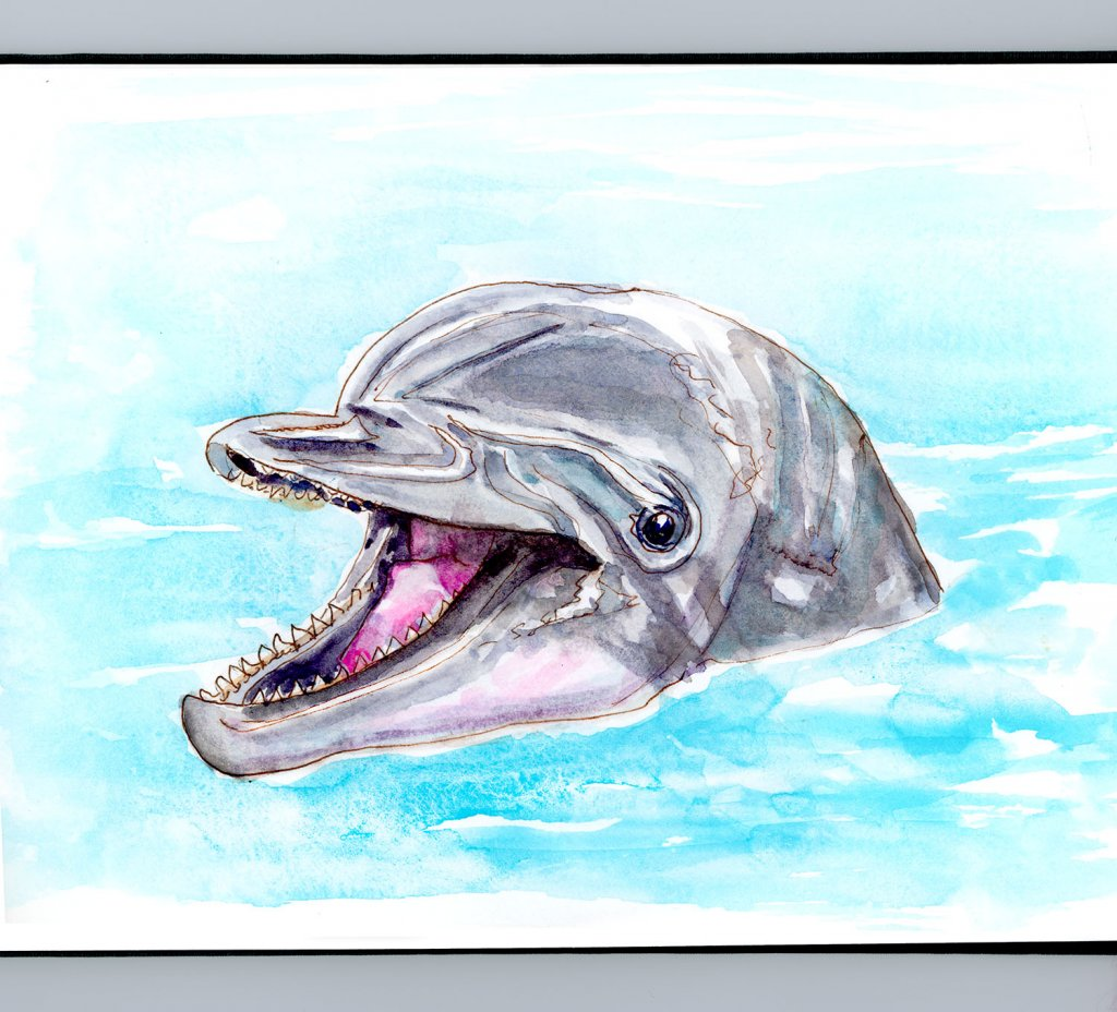 Day 14 - Smart Like A Dolphin - #doodlewashMay2018 - Doodlewash