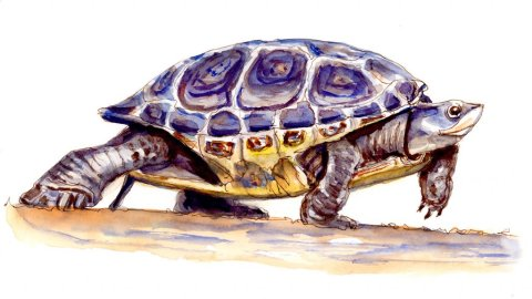 Day 23 - When The Tortoise Wins - #doodlewashMay2018 Doodlewash
