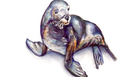 Seal Sea Lion Watercolor Painting - Day 27 - #doodlewashMay2018 Doodleash