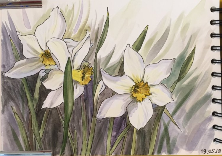 Line and wash daffodils, quick sketch IMG_1513