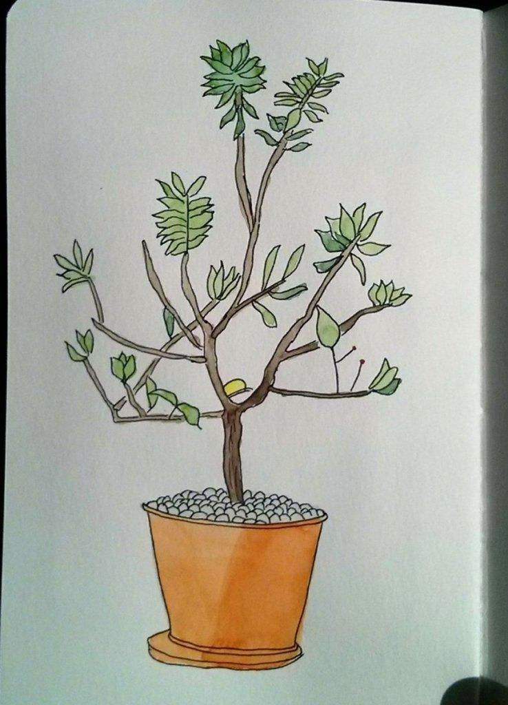 Lemon tree in a pot. IMG_20180517_072335