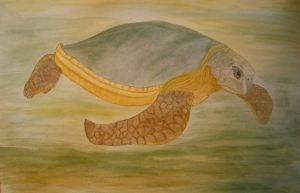 australian-flatback-sea-turtle2
