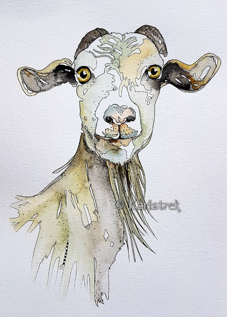 Gullable Gertrud. A typical yes-goat. 20180625_134933_wm
