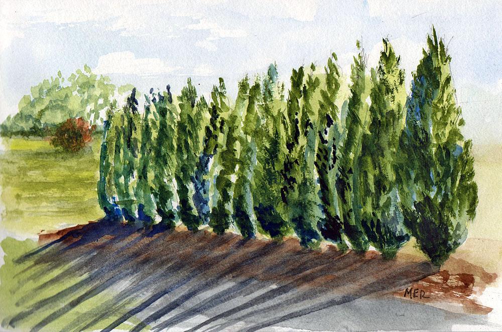 6/9/8 Trees 6.9.18 Trees img578