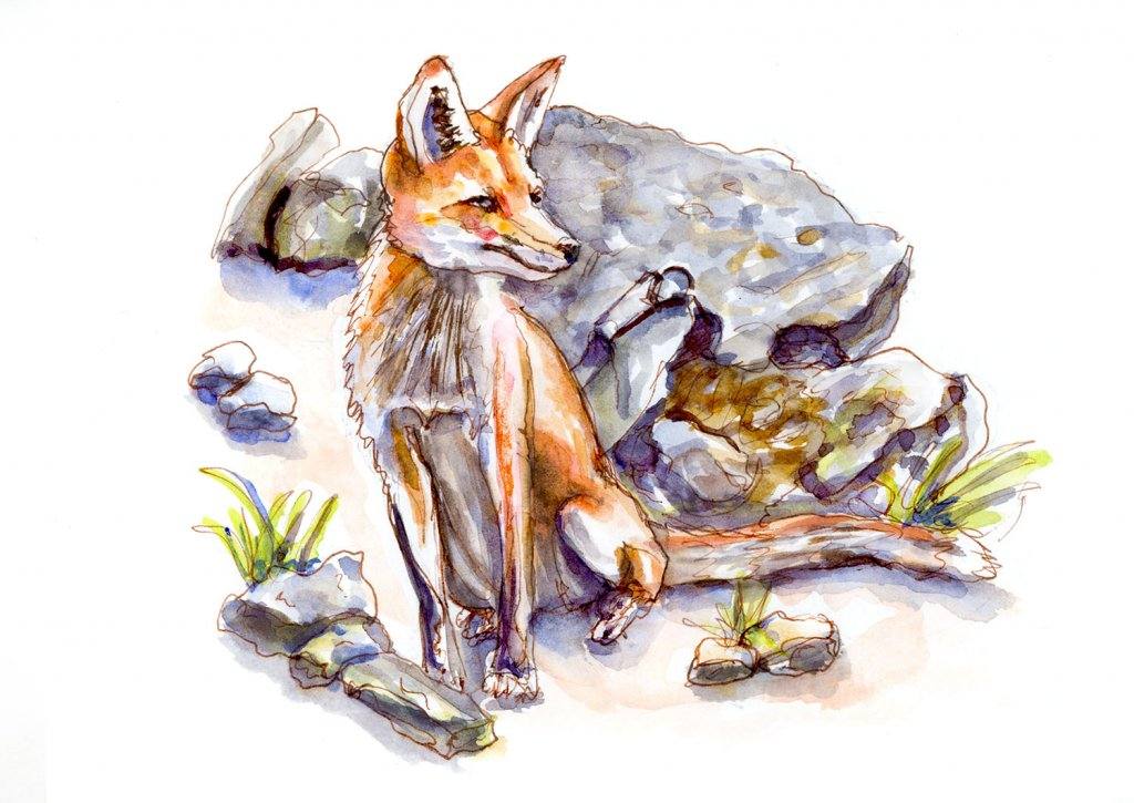Day 12 - A Fox On The Rocks - #doodlewashJune2018 Doodlewash