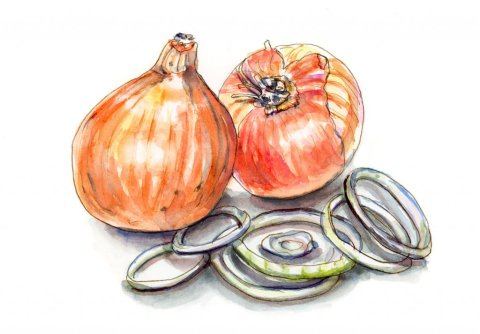 Day 17 - My Dad Always Liked Onions Watercolor #doodlewashJune2018 Doodlewash