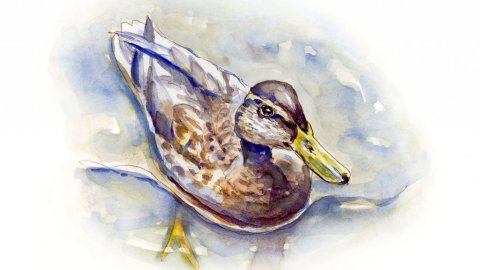 Day 26 - A Little Duck In A Big Lake - #doodlewashJune2018 Doodlewash
