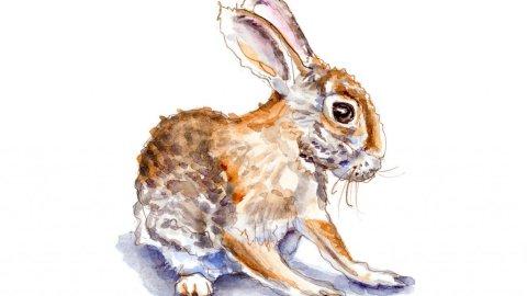 Day 4 - The Shy Little Bunny - #doodlewashJune2018 Doodlewash