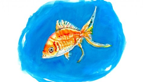 Day 7 - Inside A Little Bubble - Goldfish #doodlewashJune2018 Doodlewash