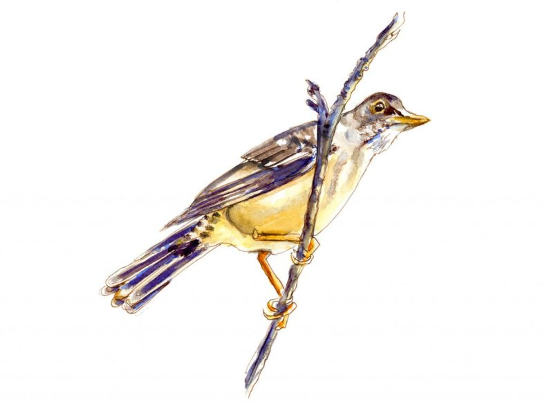 Day 9 - The Best View Of All - Bird In A Tree - #doodlewashJune2018 Doodlewash