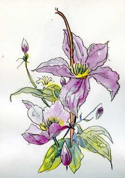 Visited Clematis gardens today. Mostly, I took lots and lots of photos, but I did a few line'n