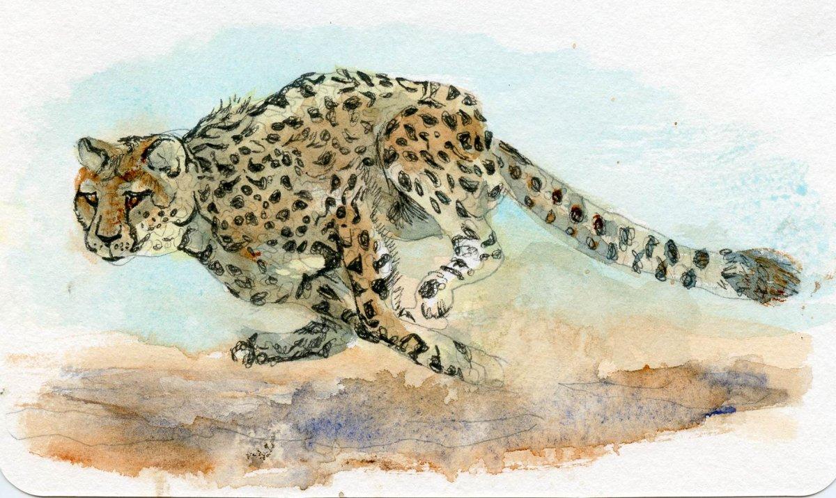 Princeton Velvetouch Review - Cougar painting example Sandra Strait - Doodlewash