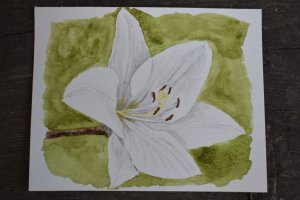 July 1, 2018 challenge sunny days. The sunny days bring the lilies into bloom. Yeah, it's a st