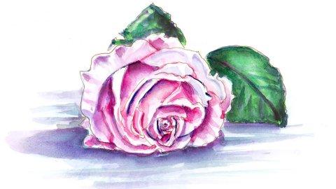 Day 11 - World Watercolor Month Beautiful Blooms Rose - Doodlewash