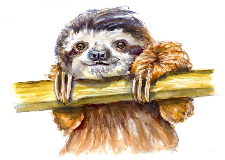 Day 12 - World Watercolor Month Forest Animals Sloth - Doodlewash