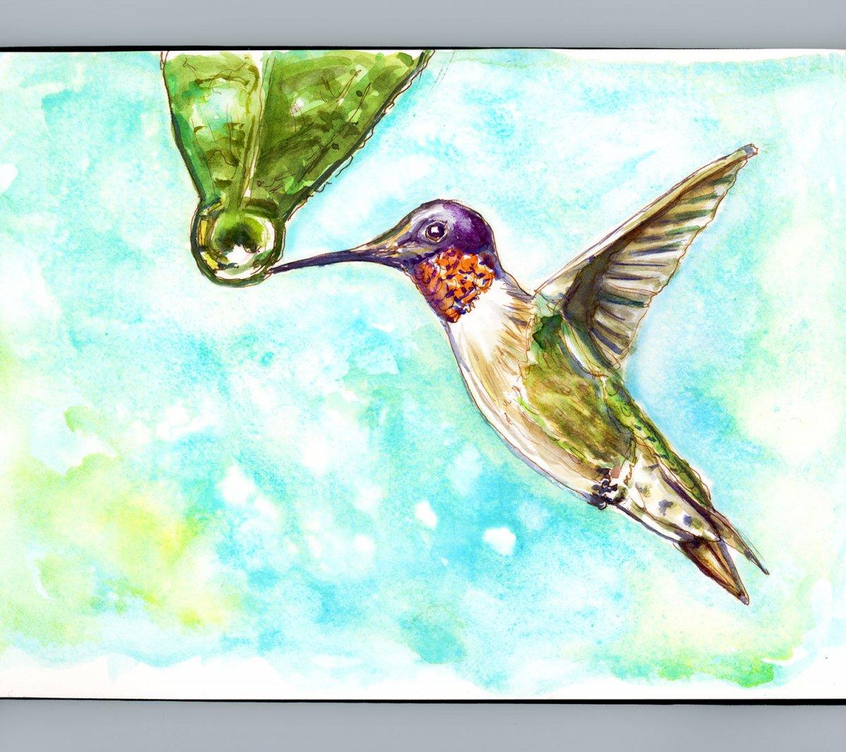 Day 19 - World Watercolor Month Rainy Days Hummingbird - Doodlewash