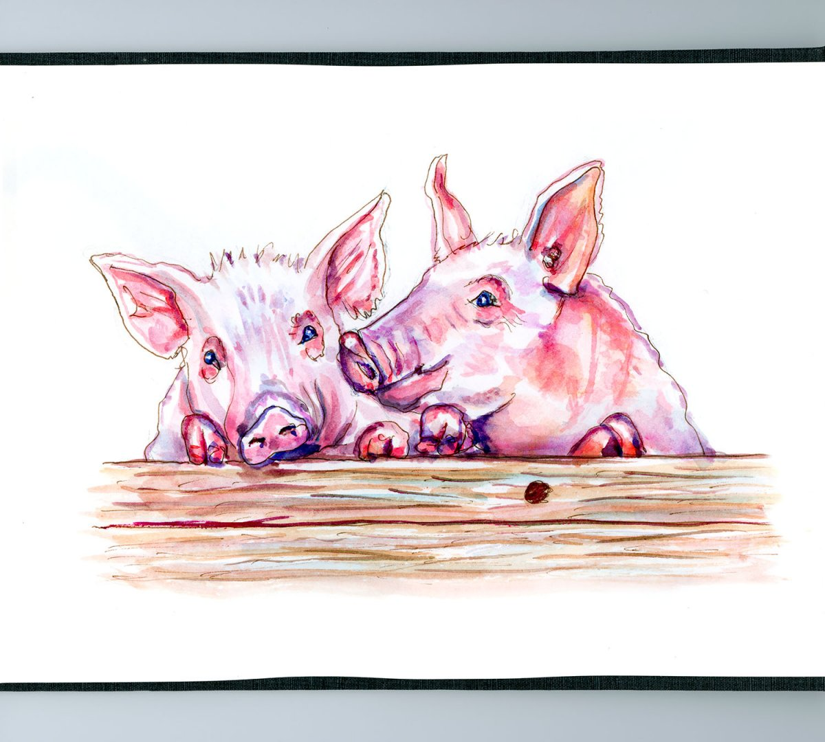 Day 25 - World Watercolor Month Farm Life Pigs - Doodlewash