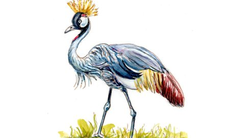 Day 28 - World Watercolor Month Nature Hike grey crowned crane - Doodlewash