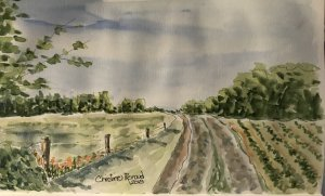 Well, this is my first for the Watercolor Month. cross fingers it will get better. IMG_0227