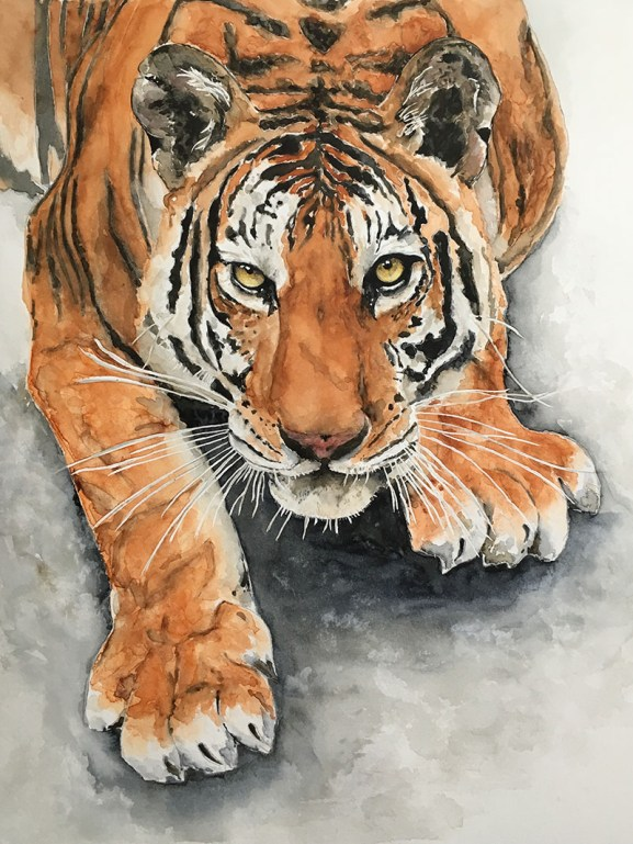 Tiger Watercolor Painting by Kate Plum - Doodlewash