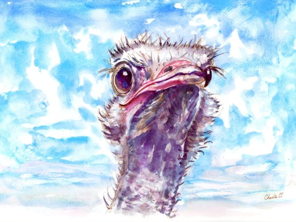 Clouds-In-The-Sky---Emu Watercolor Print