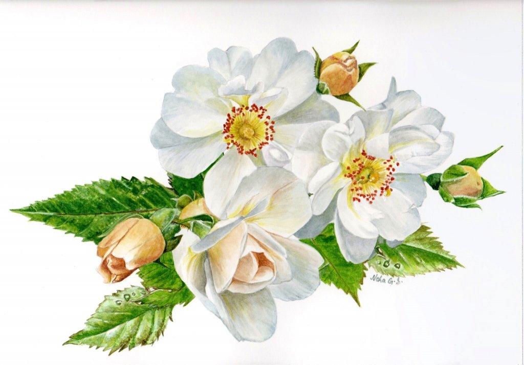 White Flower Botanical Illustration Watercolor Painting by Neha Subramaniam - Doodlewash