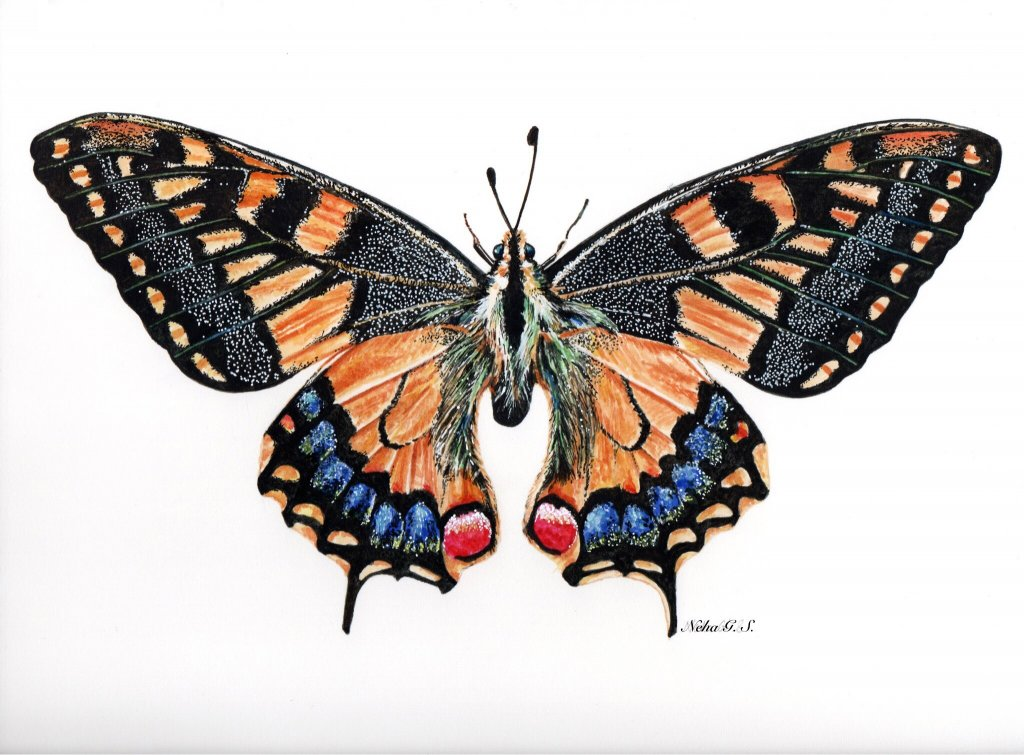 Butterfly Watercolor Painting by Neha Subramaniam - Doodlewash