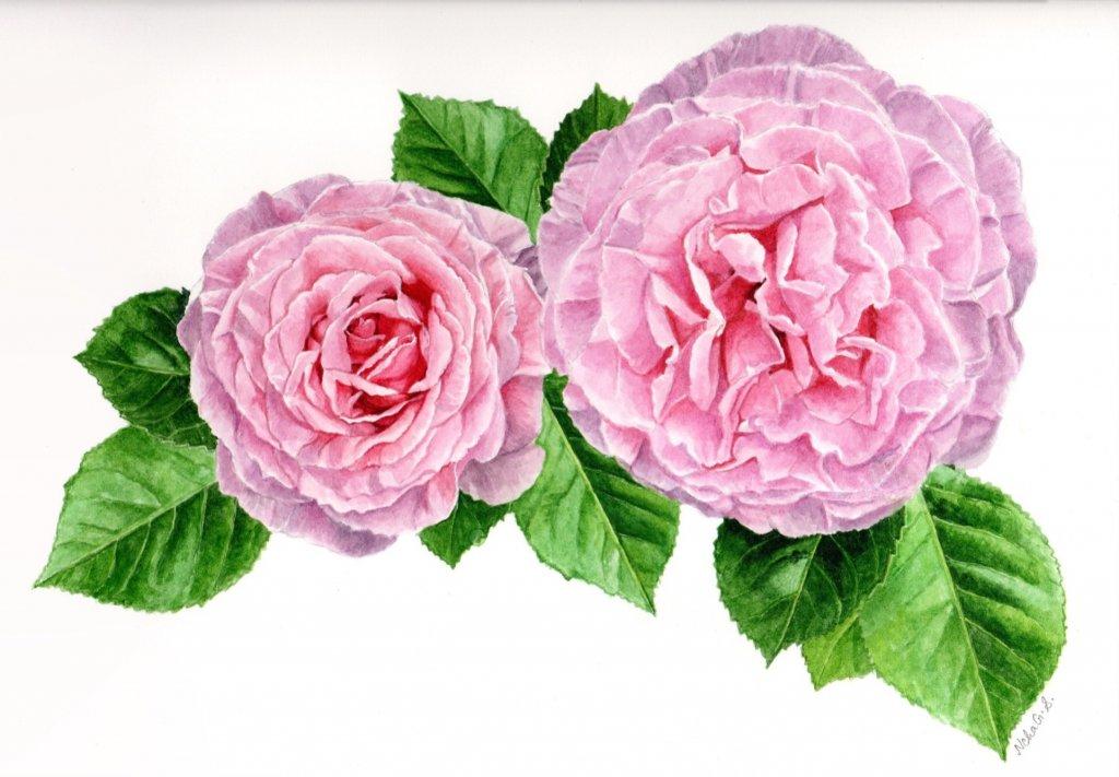 Pink Flowers Watercolor Painting by Neha Subramaniam - Doodlewash